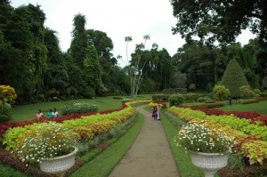 kandy-botanical-garden-sri-lanka-mysrilankatravelkandy-botanical-garden-sri-lanka-mysrilankatravel