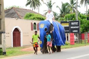 wedding-sri-lanka-elephant-mysrilankatravel-2