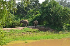 yala-national-park-elaphant-sri-lanka-mysrilankatravel