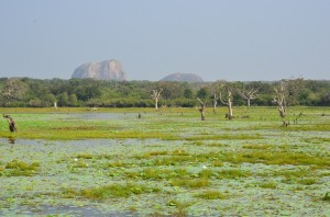 yala-national-park-wetland-sri-lanka-mysrilankatravel
